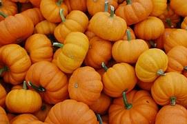 pumpkins-379869__180