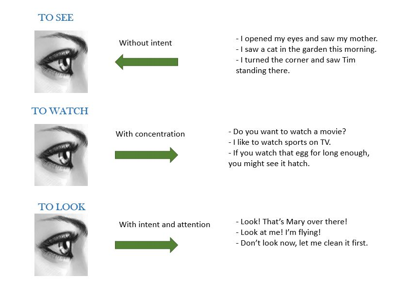 Diferencias Entre Look See Y Watch Cuando Se Usan Smyth Academy Madrid
